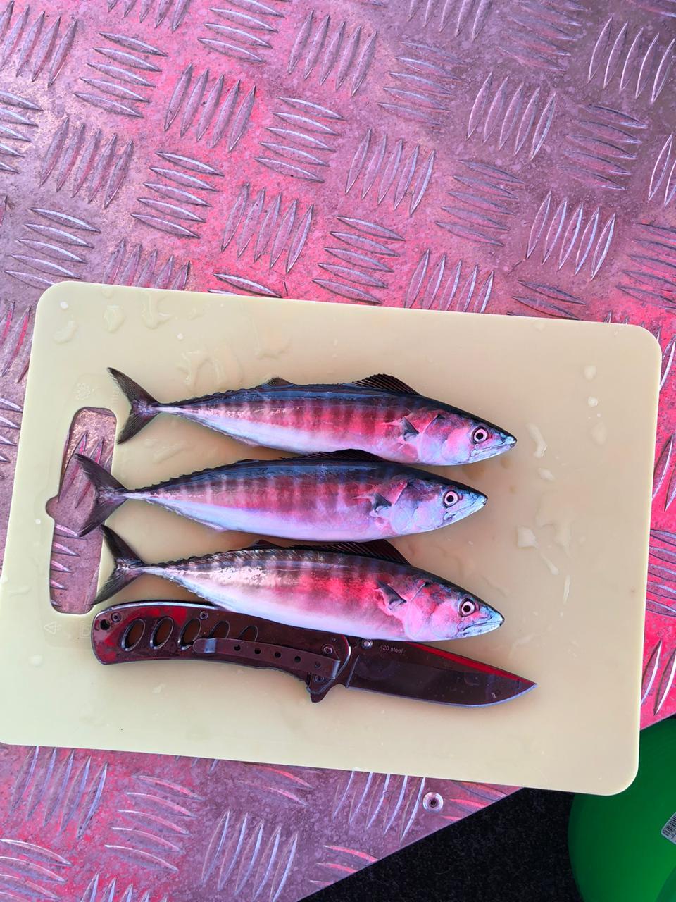 Отзывы туристов о морской рыбалке в Сочи
