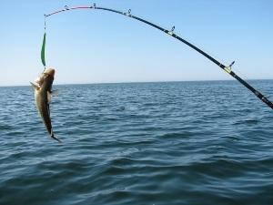 Стоимость морской рыбалки в Лоо, отзывы фото
