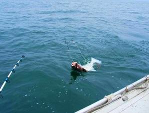 Лоо рыбалка в море