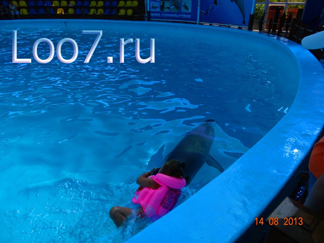 Дельфинарий в Лоо фото.