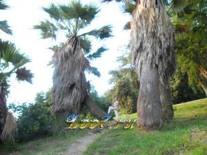 Парк Ривьера в городе Сочи