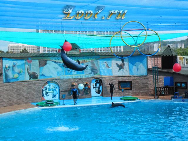 Дельфинарий в Лоо у самого моря