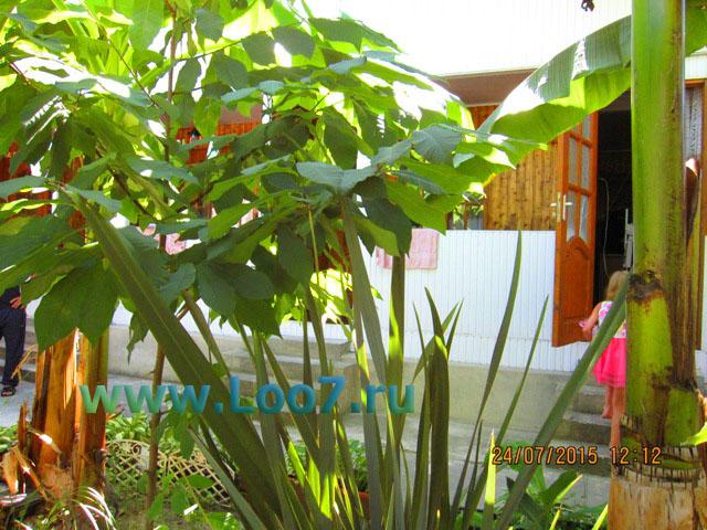 Гостевые домики в Лоо